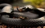 En Vahşi Hayvanlar-Zehir (Dünyanın En Zehirli 10 Hayvanı)