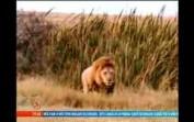 Belgesel-Vahşi Hayvanlar